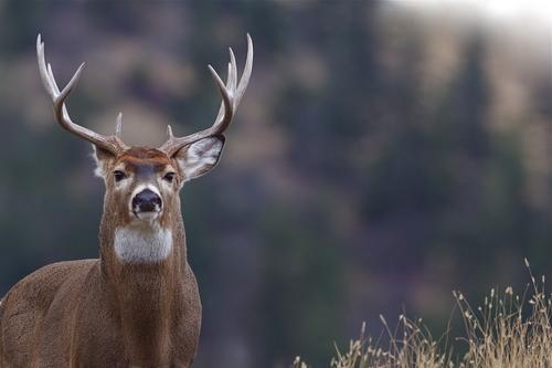 north texas deer hunt